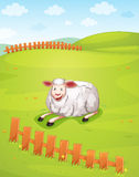 A sheep Stock Image