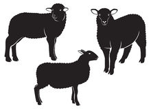 Sheep. The figure shows a sheep Stock Image