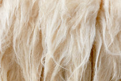 Sheep fleece for texture background Royalty Free Stock Photos