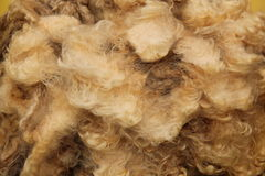 Sheep Fleece. Royalty Free Stock Image