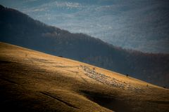 Sheep flock and shepherd on a hill Stock Photo
