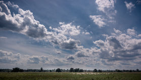 Sheep. Flock of sheep under a sky with clouds Royalty Free Stock Photo