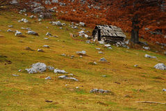 Sheep fold. Deserted sheep fold in the carpathians Stock Photo