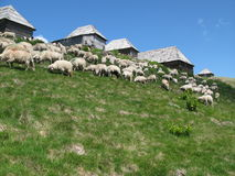 Sheep fold. Farm, agriculture, zootechnics at mountains Stock Images