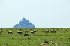 Sheep in front of the Mont-Saint-Michel, France Stock Image