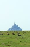 Sheep in front of the Mont-Saint-Michel, France Stock Photo