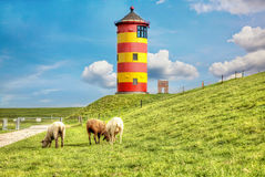 Sheep in front of the Pilsum lighthouse Stock Images