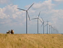 Sheep in front of windturbines. Sheep watching from a dike in front of a row of windturbines Stock Photos