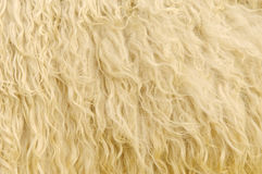 Sheep Fur Background Stock Photography