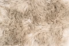 Sheep fur Natural sheepskin rug background. Sheep fur. Natural sheepskin rug background. Wool texture royalty free stock photography