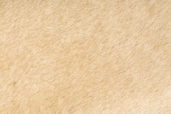 Sheep fur texture Stock Photography