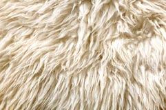 Sheep fur texture. Macro Stock Photography