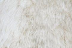 Sheep fur texture. Macro. background Stock Photo