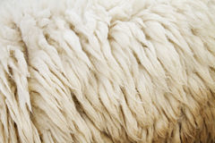 Sheep fur texture background closeup Royalty Free Stock Photo