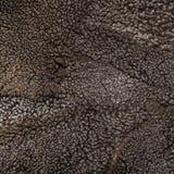 Sheep fur texture, Mouton (manufactured sheepskin) Royalty Free Stock Photos