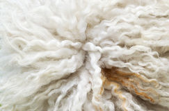 Sheep fur Royalty Free Stock Photos