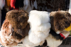 Sheep & goat fell Royalty Free Stock Photos