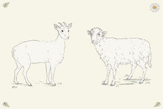 Sheep and goat Vintage engraving style. Hand drawn cheerful goat and happy sheep standing in the field. Ornate colorful illustration. Vintage engraving style royalty free illustration
