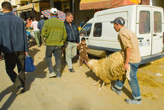 Sheep going home for the sacrifice of Eid al-Adha Royalty Free Stock Images