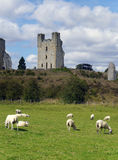 Sheep graze in front of old castle Royalty Free Stock Photo