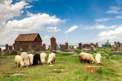Sheep graze in Noratus Stock Image