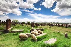 Sheep graze in Noratus. Cemetery with Khachkars, Armenia Royalty Free Stock Photography