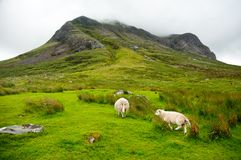 Sheep grazing in the amazing landscape Royalty Free Stock Photos
