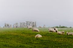 Sheep grazing at a foggy Stonehenge stock photo