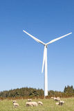 Sheep grazing at the foot of a wind turbine   against a sunny bl Stock Photo