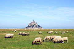 Sheep grazing in front of Mont Saint Miche Royalty Free Stock Photos