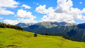 Sheep grazing in green valley in Caucasus mountains. Georgia, Tusheti royalty free stock images