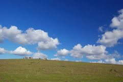 Sheep grazing on the hillside Royalty Free Stock Photography