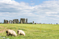 Sheep grazing by historic Stonehenge in Salisbury stock image