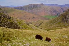 Sheep grazing in Lake District, England. Picturesque view of valleys in Lake District with two sheep grazing on the slope Royalty Free Stock Photos