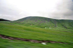Sheep grazing on mountain. Sheep grazing on the mountains in Qinghai, North-West China. View on car Stock Images