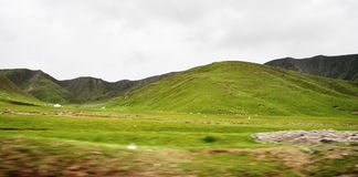 Sheep grazing on mountain. Sheep grazing on the mountains in Qinghai, North-West China. View on a moving car Royalty Free Stock Photography