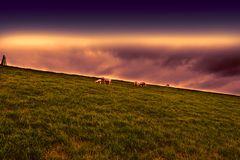 Sheep Grazing on Protective Dam Royalty Free Stock Photos