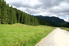 Sheep grazing in the mountains. Ship pasturage in the mountains Royalty Free Stock Photography