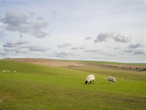 A flock of sheep grazing on hilly land against a cloudy sky Stock Image