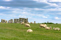 Sheep grazing at Stonehenge. Stonehenge is one of the wonders of the world and the best-known prehistoric monument in Europe royalty free stock photos