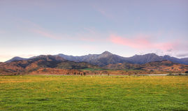 Sheep Grazing at Sunrise Stock Images