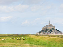 Sheep grazingnear mont saint-michel abbey Royalty Free Stock Image