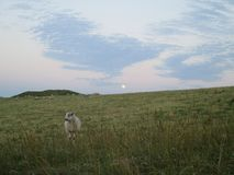 Moonlight Grazing royalty free stock photography