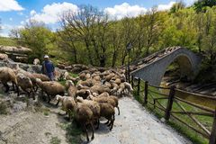 Sheep in Greece royalty free stock photos