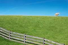 Sheep on green meadow with small lamb Royalty Free Stock Images