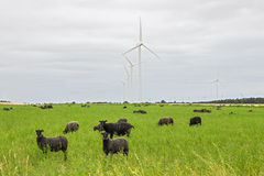 Sheep on green pasture, with wind turbines in a distance Royalty Free Stock Images