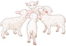 Sheep Group Stock Photography