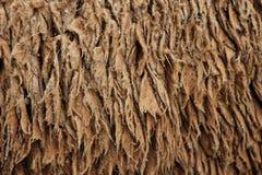 Sheep hair (Texture) Royalty Free Stock Image