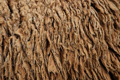Sheep hair (Texture) Stock Photos