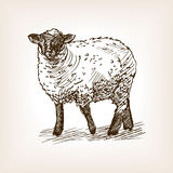 Sheep hand drawn sketch vector Royalty Free Stock Photography